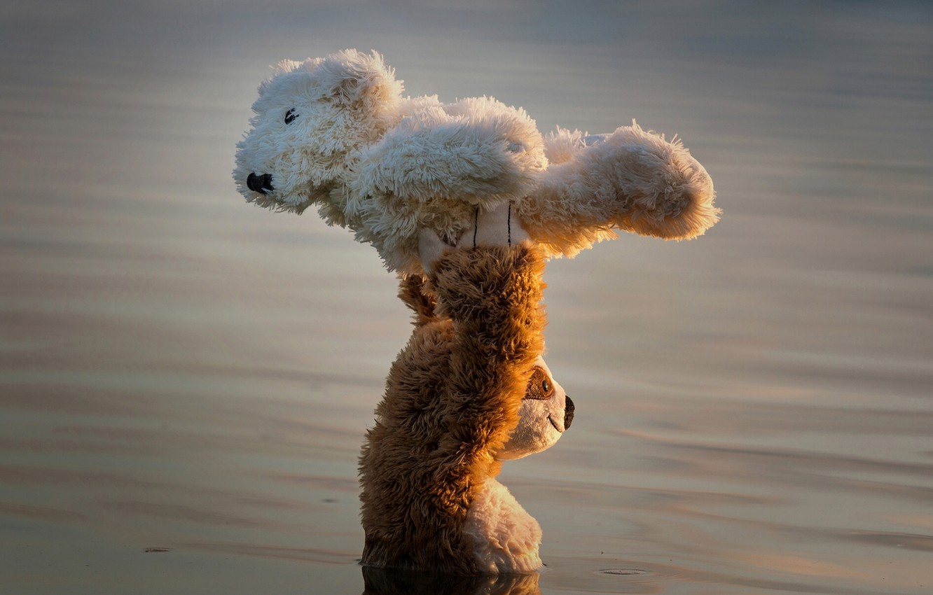 Wallpaper water dance the situation bears support Teddy bears 1332x850