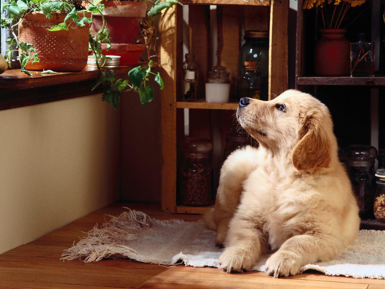 Dog Wallpaper For Home Wallpapersafari