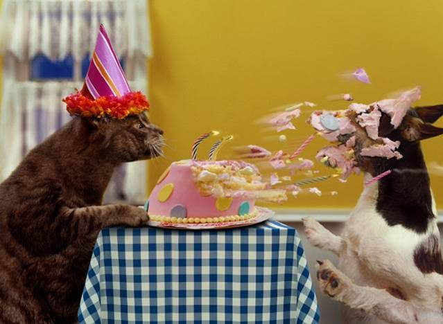 Funny Birthday Cat 27 Desktop Wallpaper   Funnypictureorg 639x468
