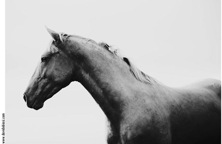 schwarz wei spanische pferd Vektorgrafik   ForWallpapercom 936x606