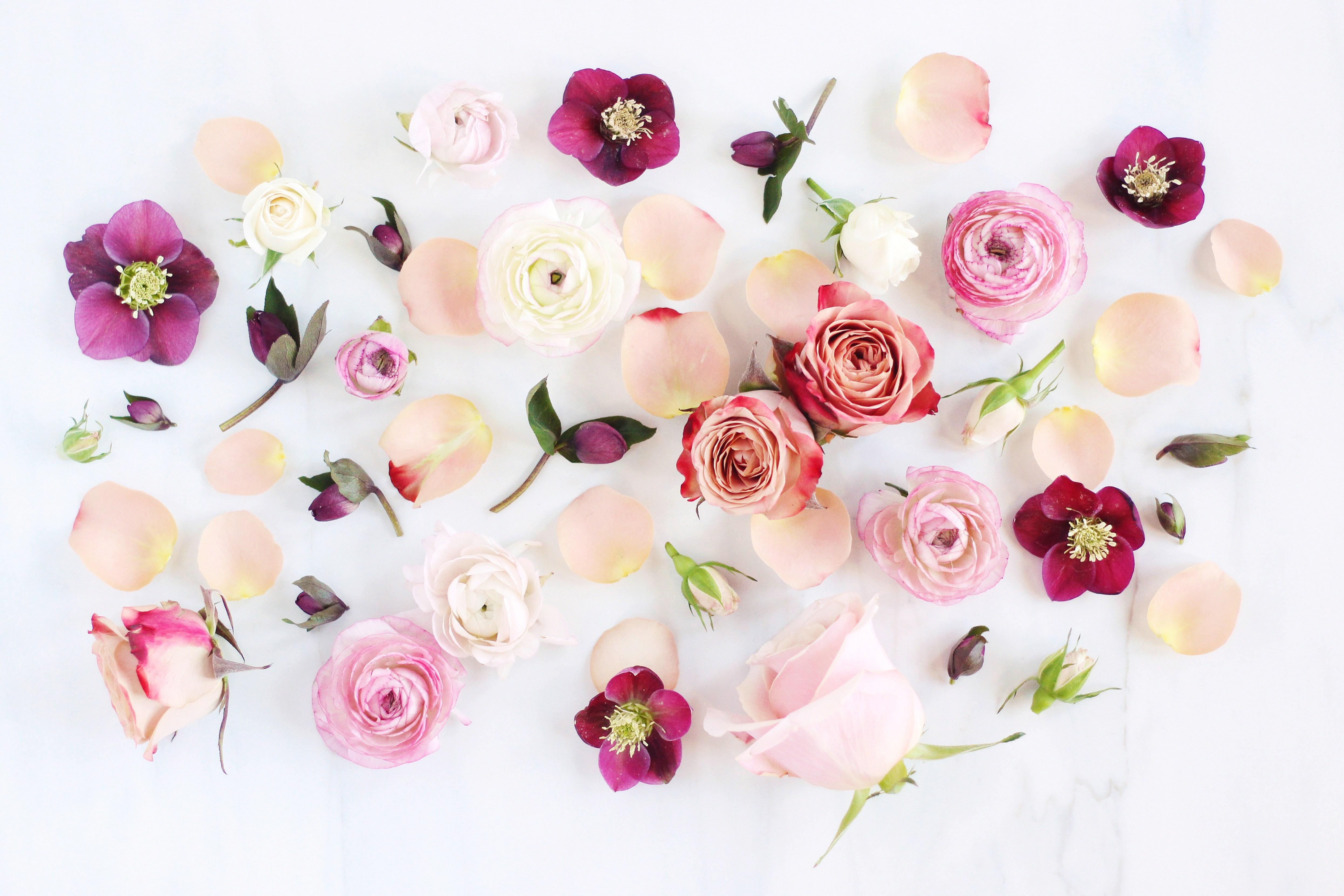 Digital Blooms February 2017   Aesthetic Desktop Wallpaper Flowers 4980x3320