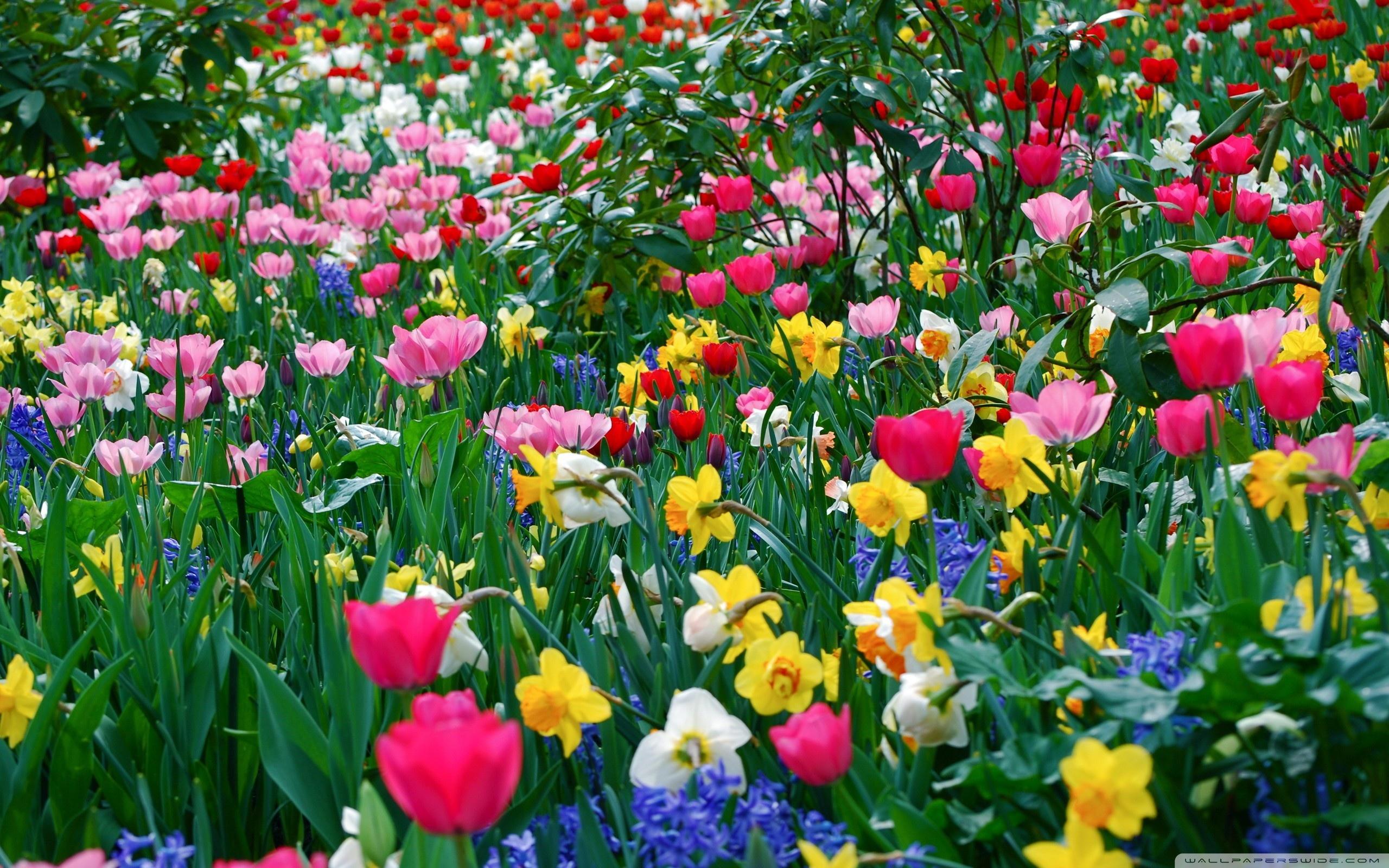 FLOWERS FLOWERS EVERYWHERE   Spring Wallpaper 37259297 2560x1600