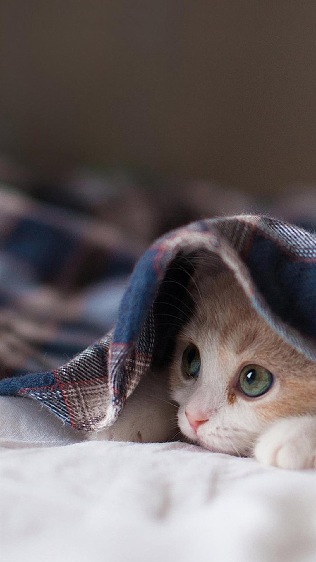 Free Download Galaxy Cat Wallpaper Iphone Cat Galaxy S4 Wallpapers