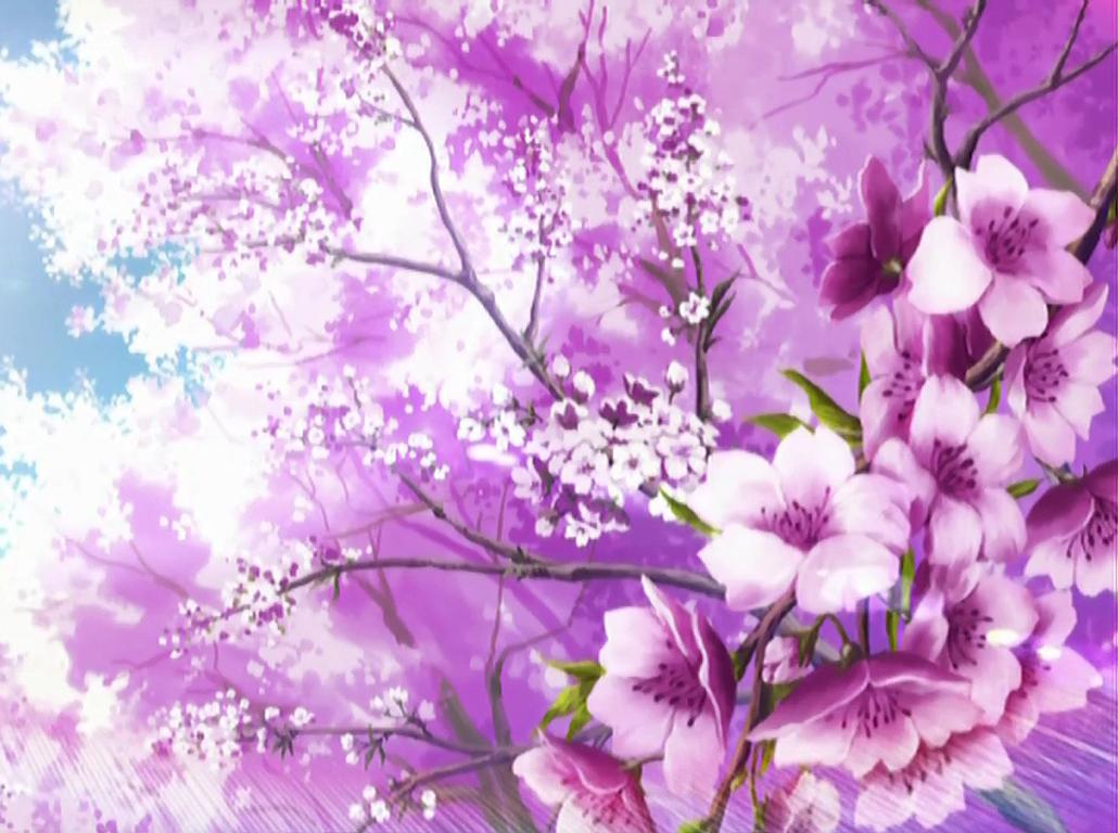 Free Download Sakura Flower Wallpaper Hd Sakura Flower Japan