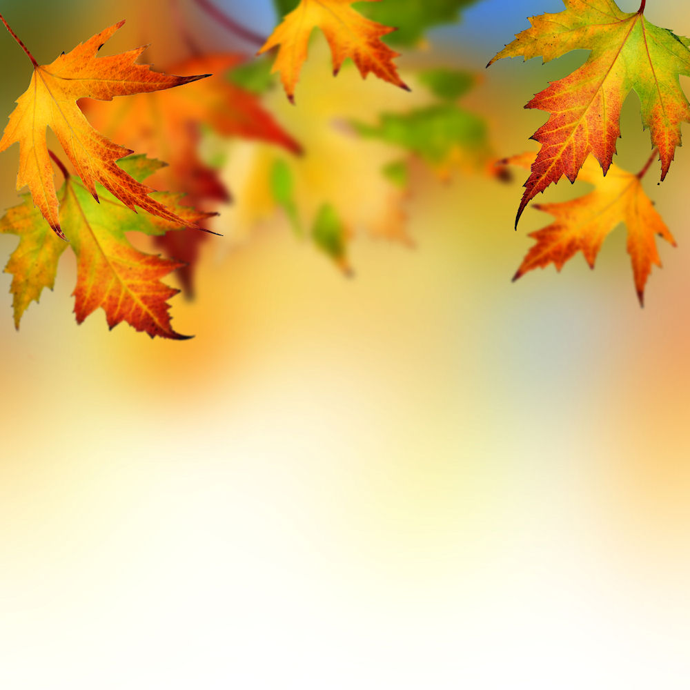 autumn leaves backgrounds wallpapers autumn leaves picturejpg 1000x1000