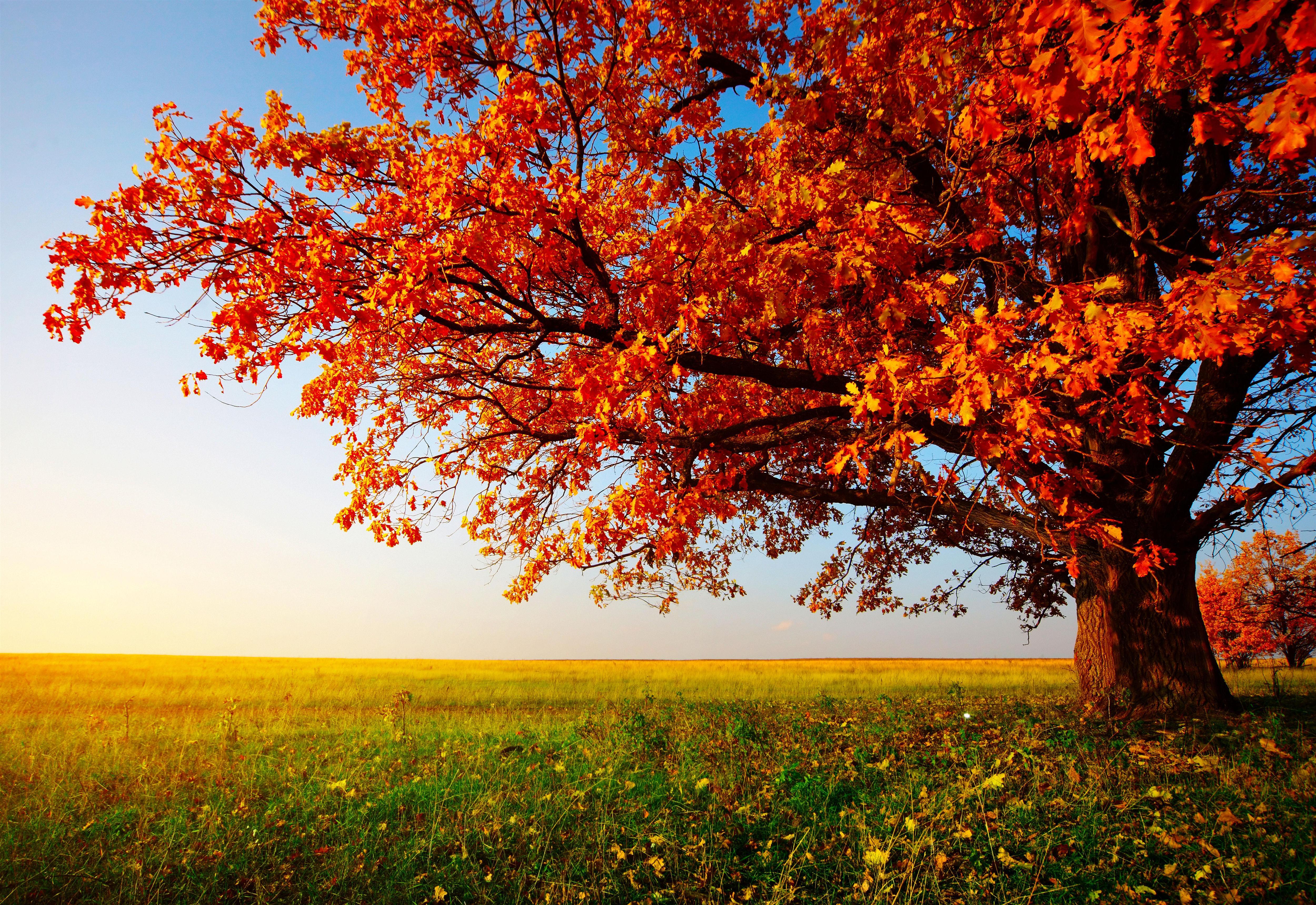 autumn trees desktop wallpaper 5000x3441