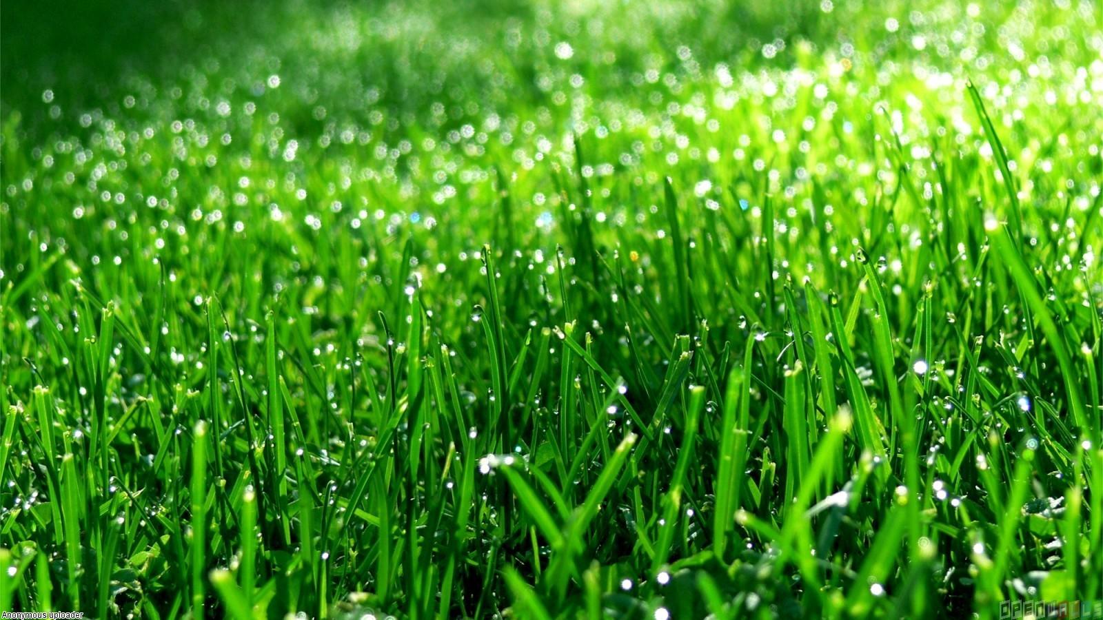 Green grass wallpaper 17657   Open Walls 1600x900