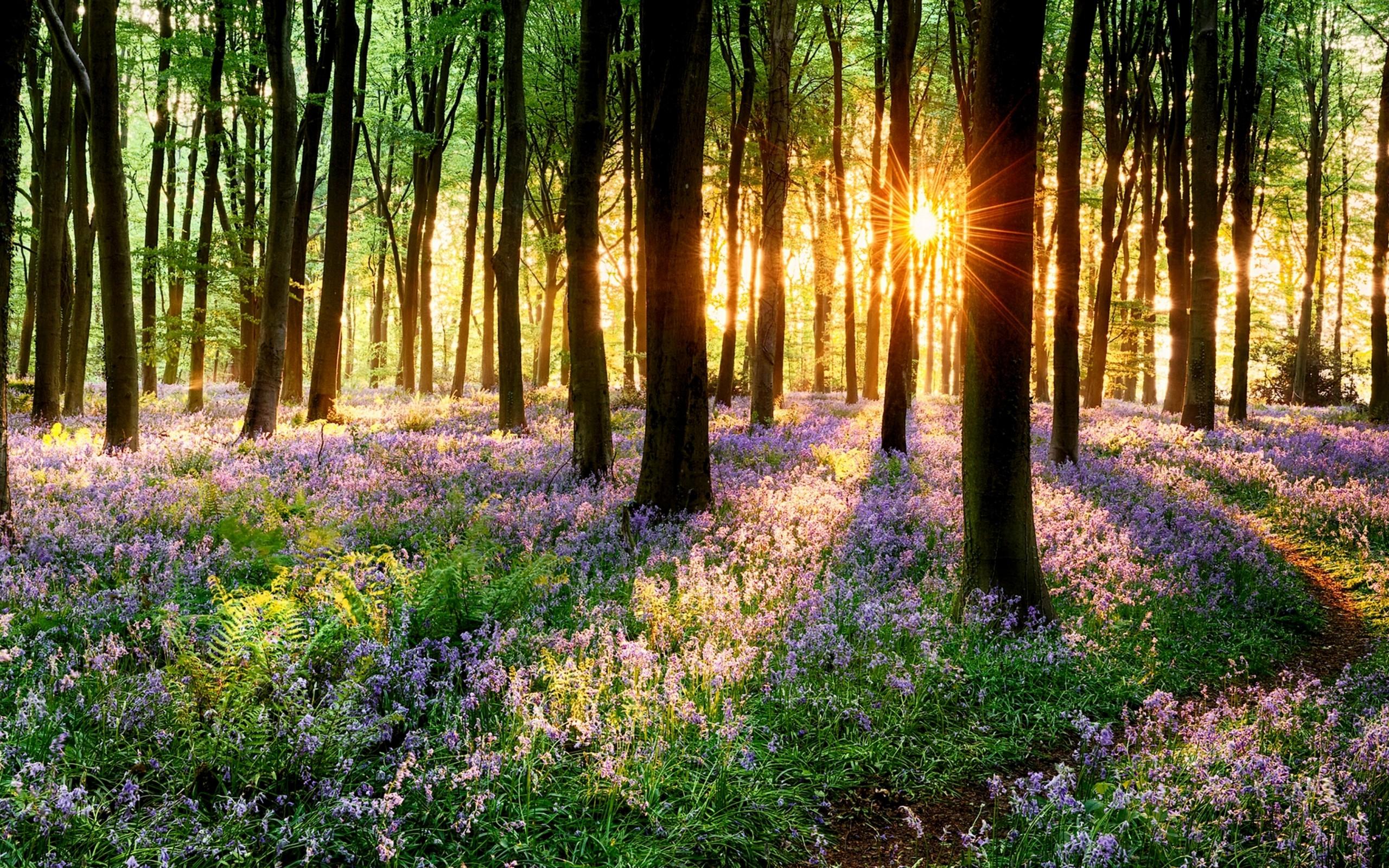 Spring grass on sunset 4K Ultra HD wallpaper 4k WallpaperNet 2560x1600