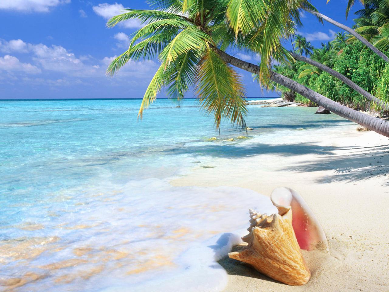 берег пальма море солнце пляж  № 3779808 бесплатно