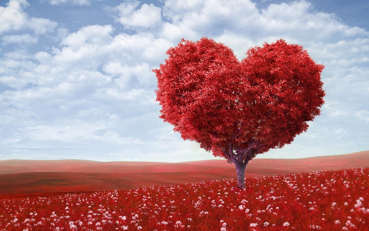 Beautiful Love Heart Wallpaper HD Pics - One HD Wallpaper Pictures ...