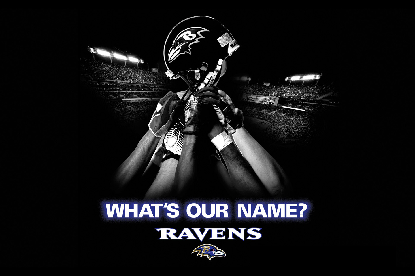 Baltimore Ravens desktop image Baltimore Ravens wallpapers 1440x960
