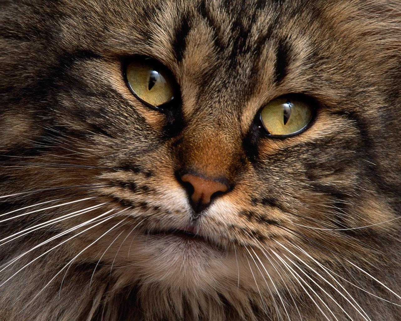 Cats wallpaper   Cats Wallpaper 5194373 1280x1024