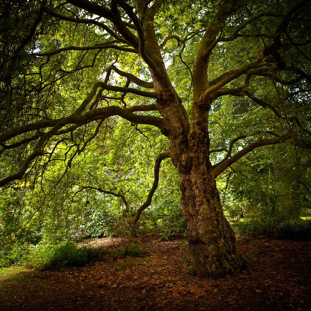 Tree of Life   Jeffs Blog 1024x1024