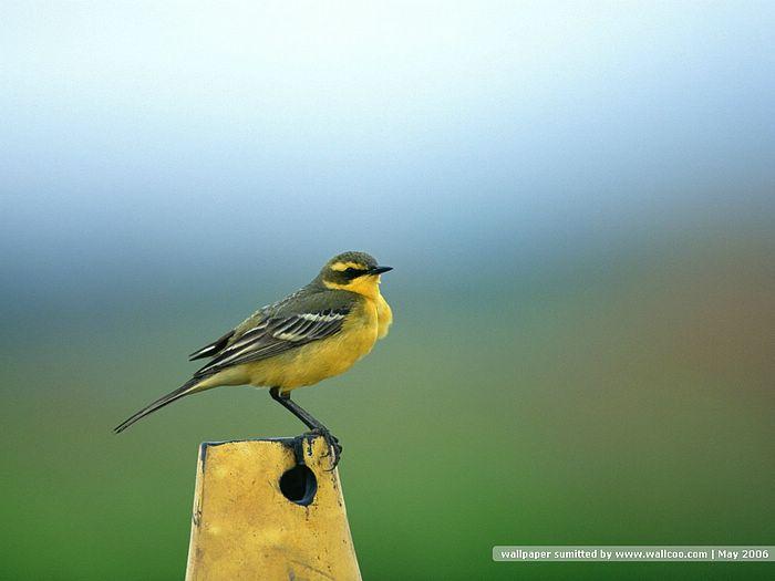 Bird photography Vol3   Birds Variety Wallpaper   Birds on branches 700x525
