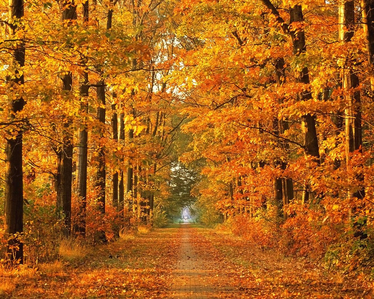 autumn wallpapers for desktop autumn wallpaper widescreen autumn 1280x1024