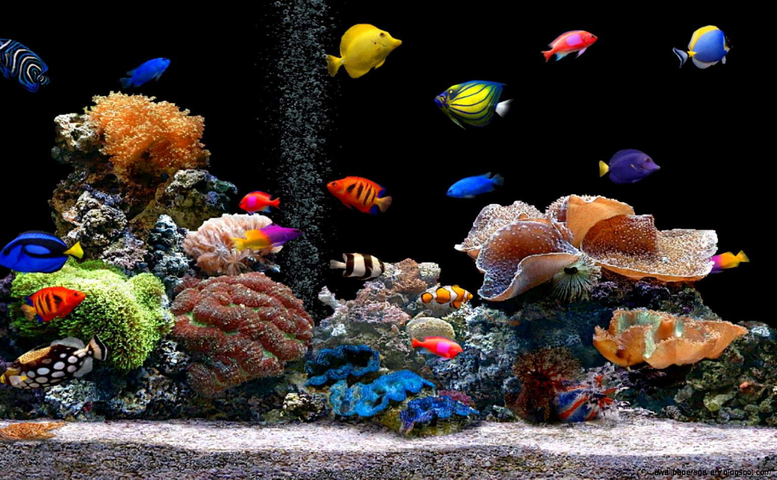 Animated Fish Tank Desktop 1545x955