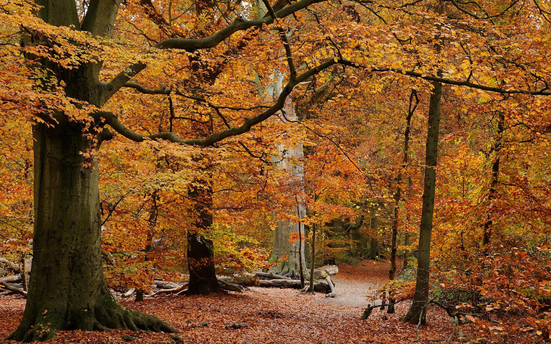 scenery landscape desktop forest wallpaper 1920x1200 1920x1200