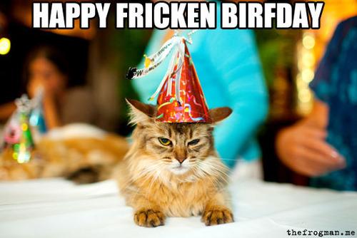 Funny Birthday Cat 19 Desktop Wallpaper   Funnypictureorg 500x334