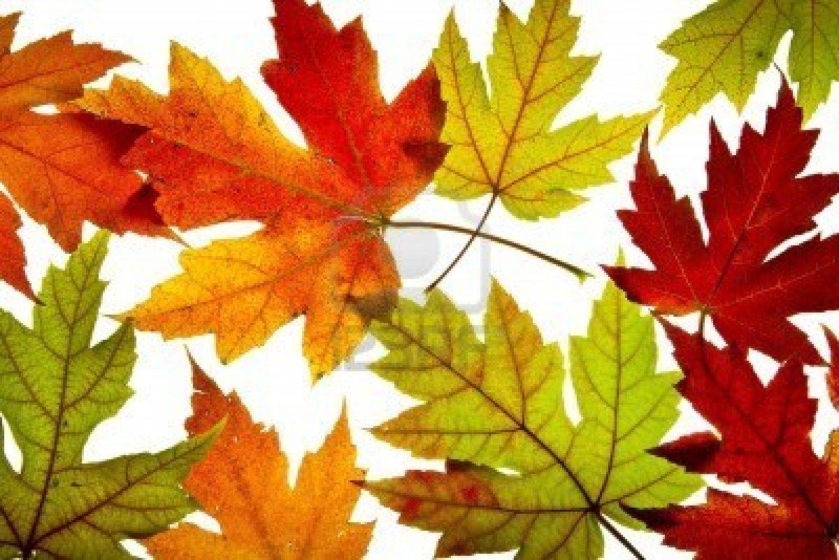 Fall Color Backgrounds | wallpaper, wallpaper hd, background desktop
