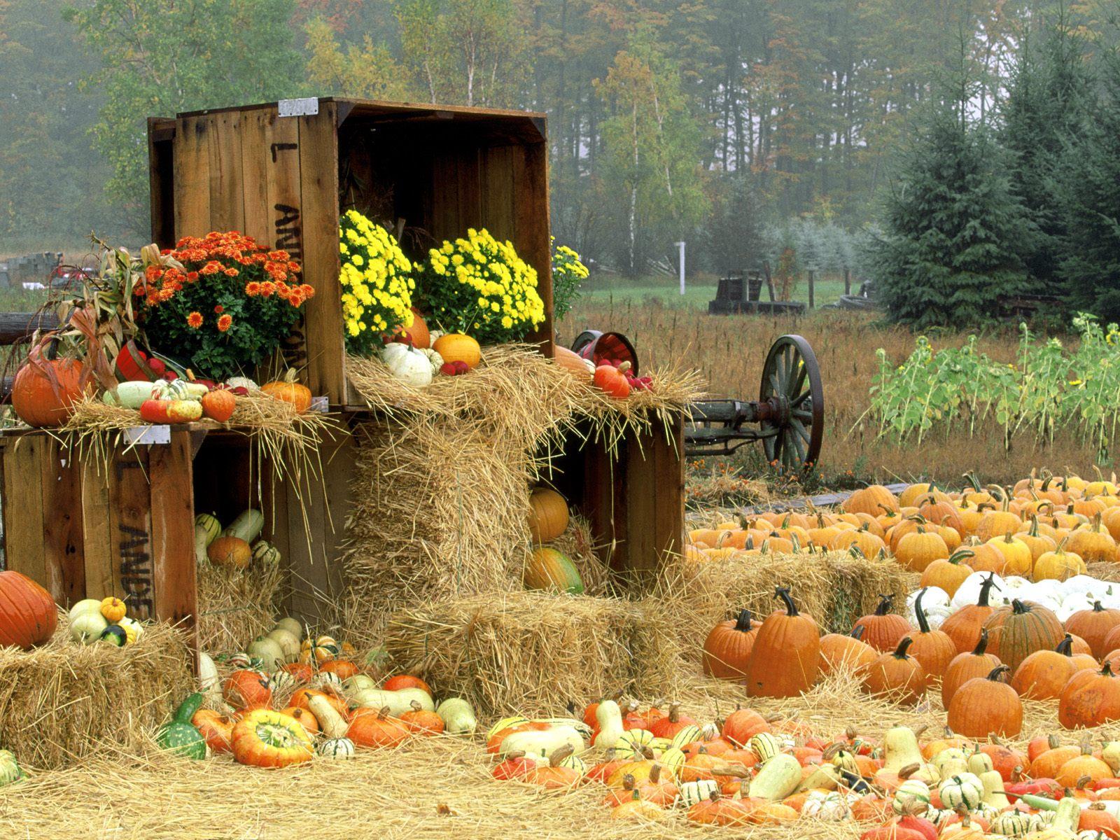 Autumn Autumn Roadside Manistee County Onekama Michigan 1600x1200