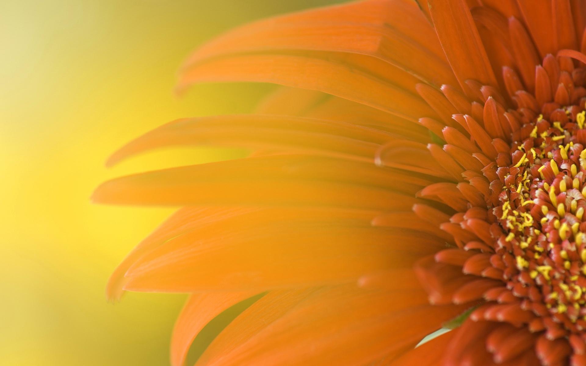 Wallpapers HD Wallpapers Widescreen widescreen sunflower wide 1920x1200