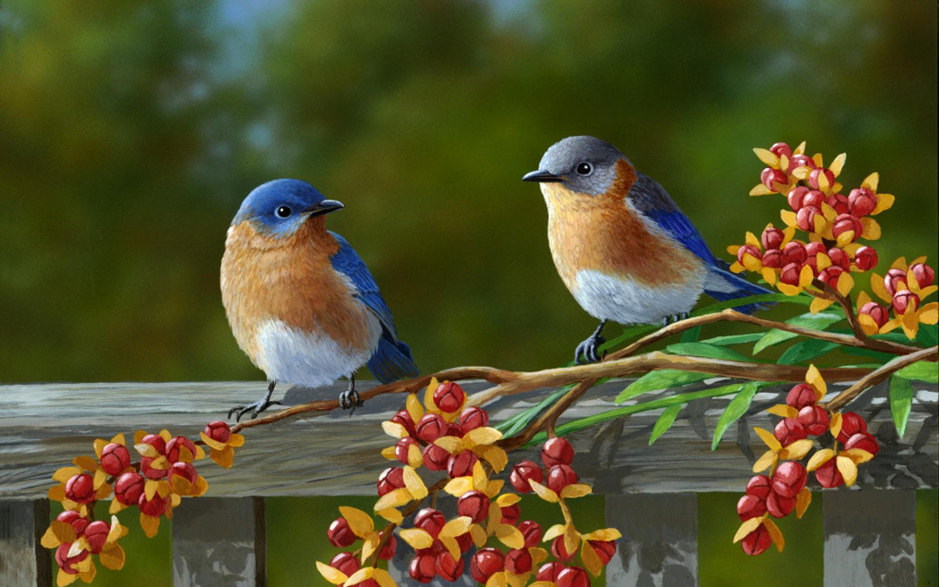 beautiful birds wallpaper 1920x1080 beautiful birds Car Pictures 1920x1200