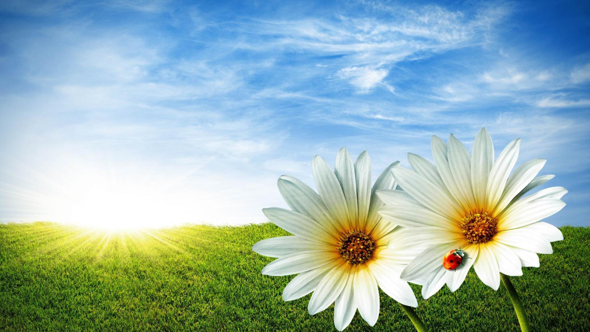 Beautiful Spring Desktop Wallpaper HD Wallpaper 1920x1080