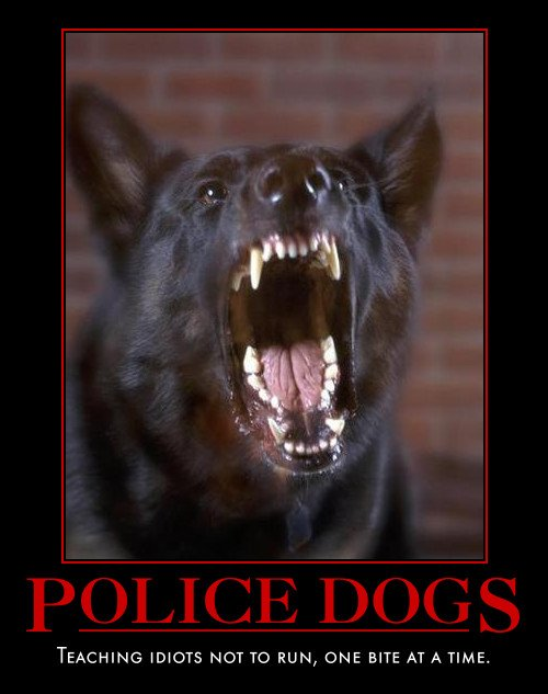 here are some police k9 motivational posters a friend sent me enjoy 500x633