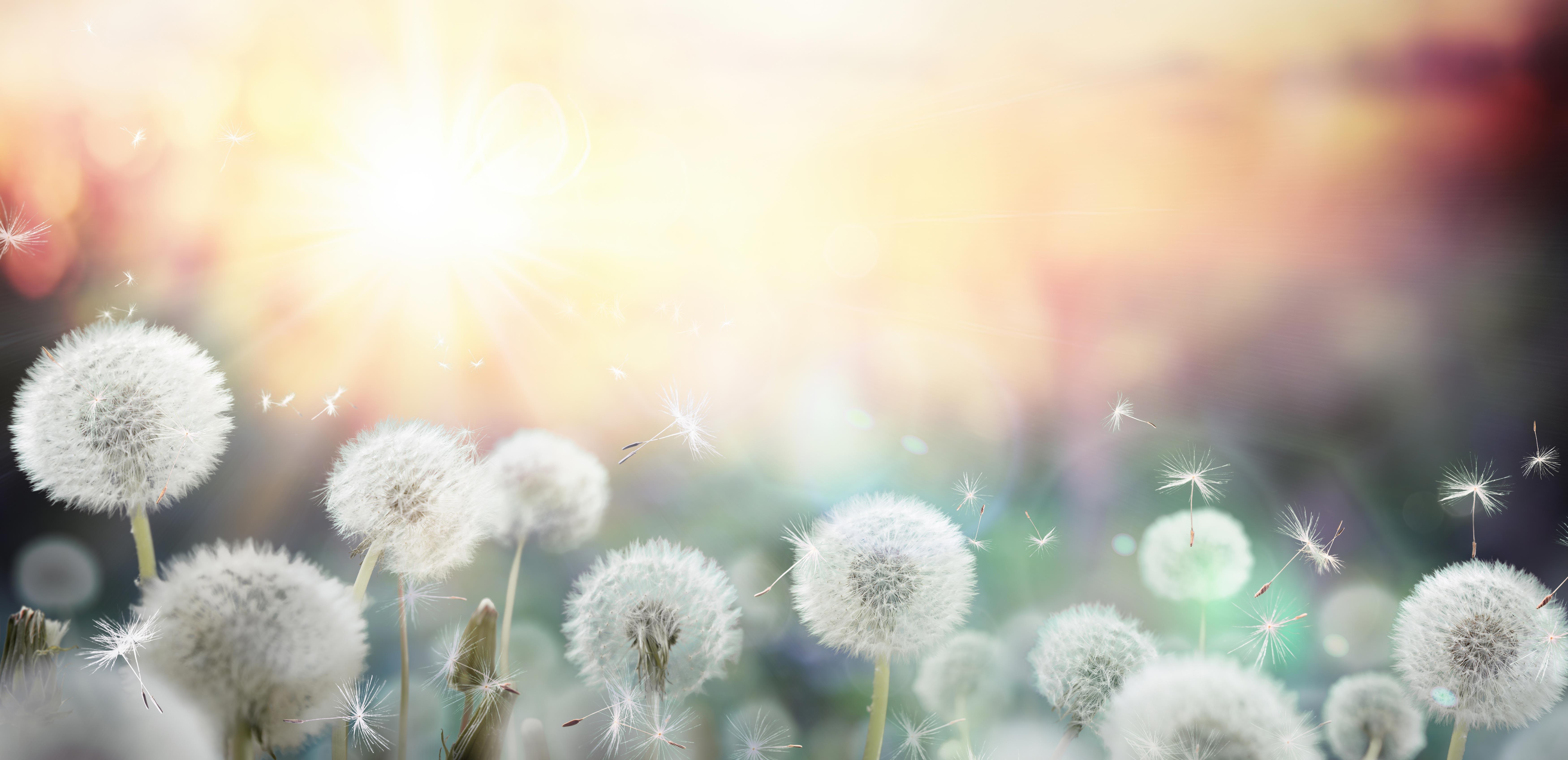 Common Allergies Symptoms Holistic Medicine Indianapolis 7000x3392
