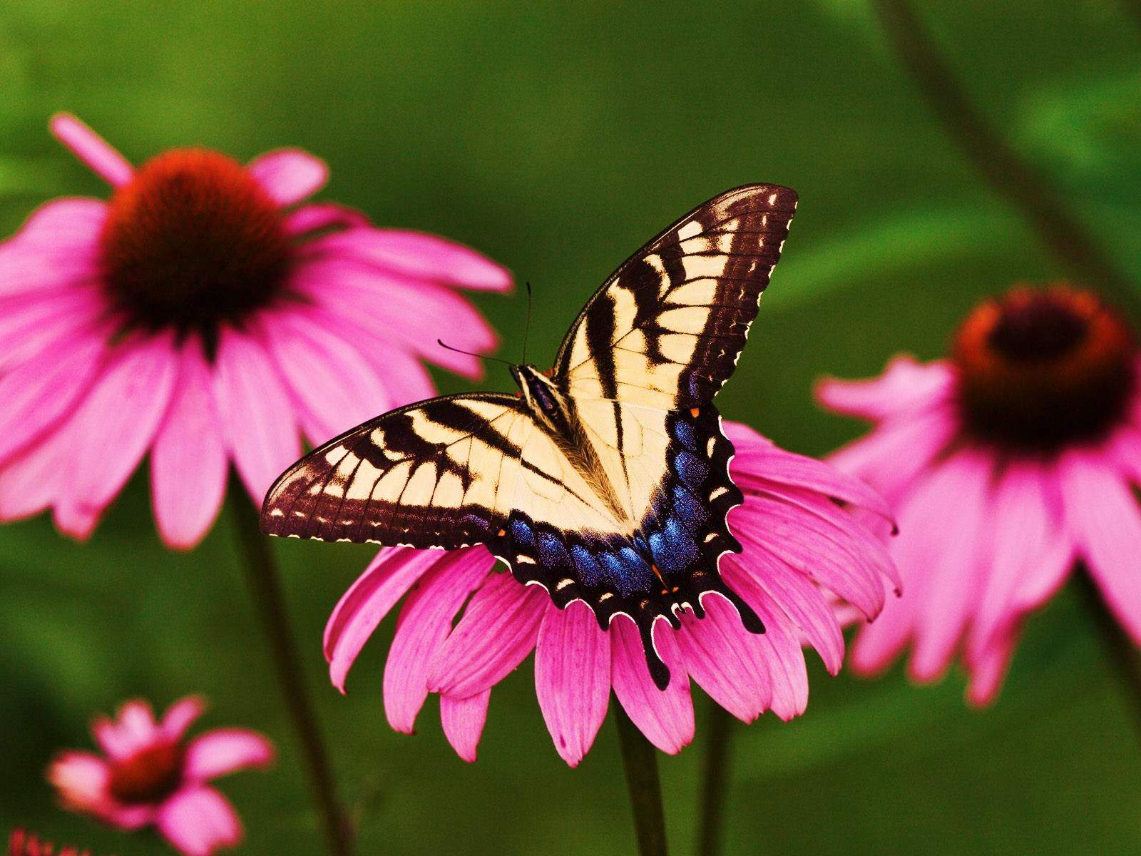 flower lovers Flowers butterfly natural beauty desktop wallpapers 1600x1200
