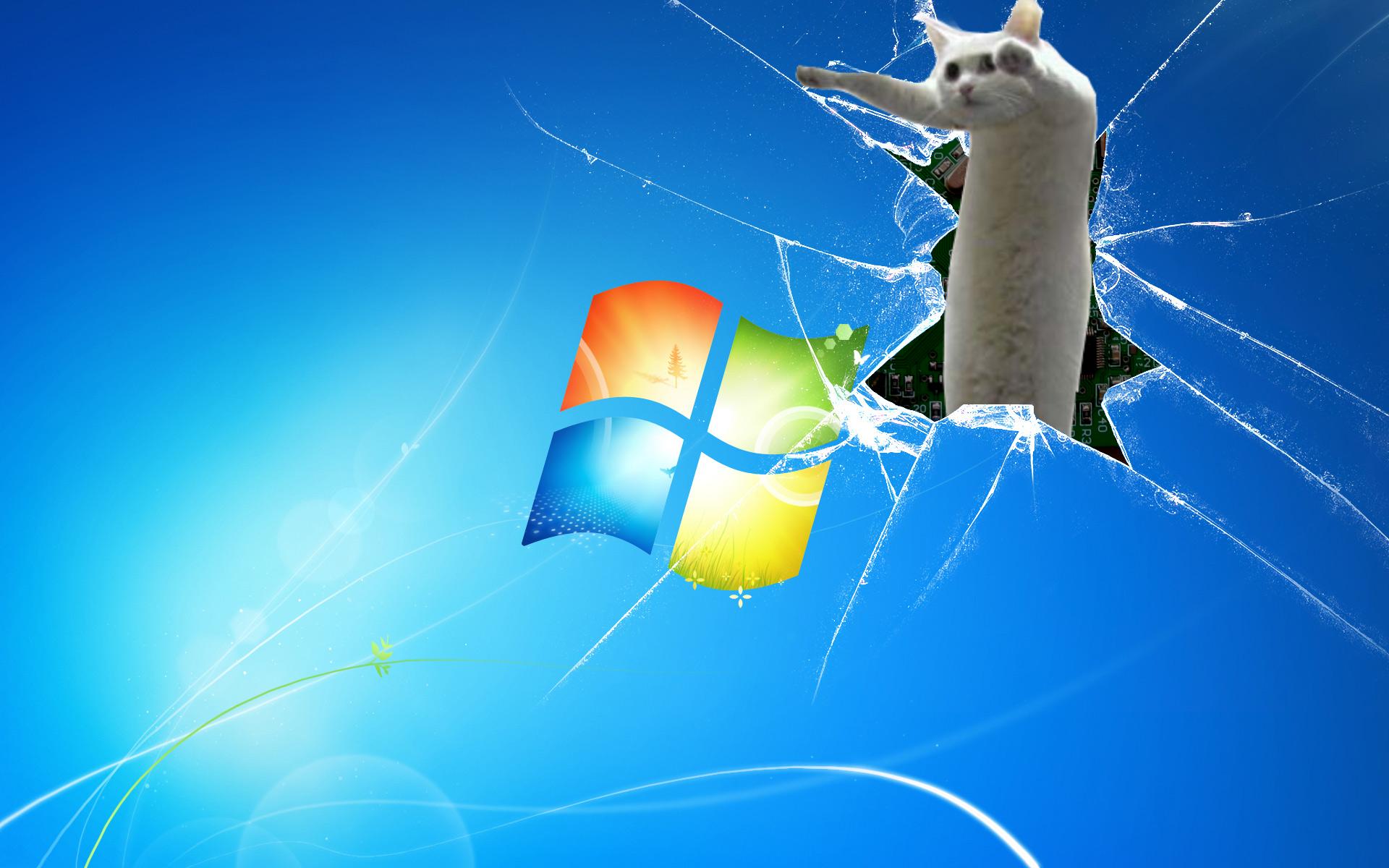Longcat background Longcat Know Your Meme 1920x1200