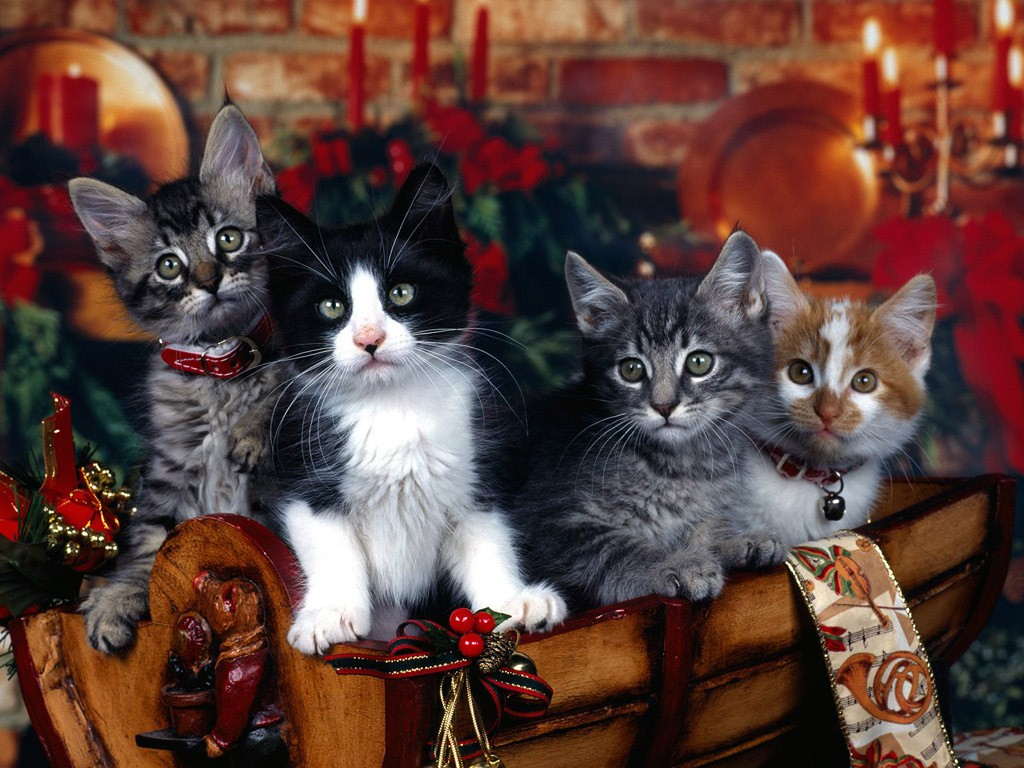 new year wallpapers cat quartet newyearjpgru 1024x768