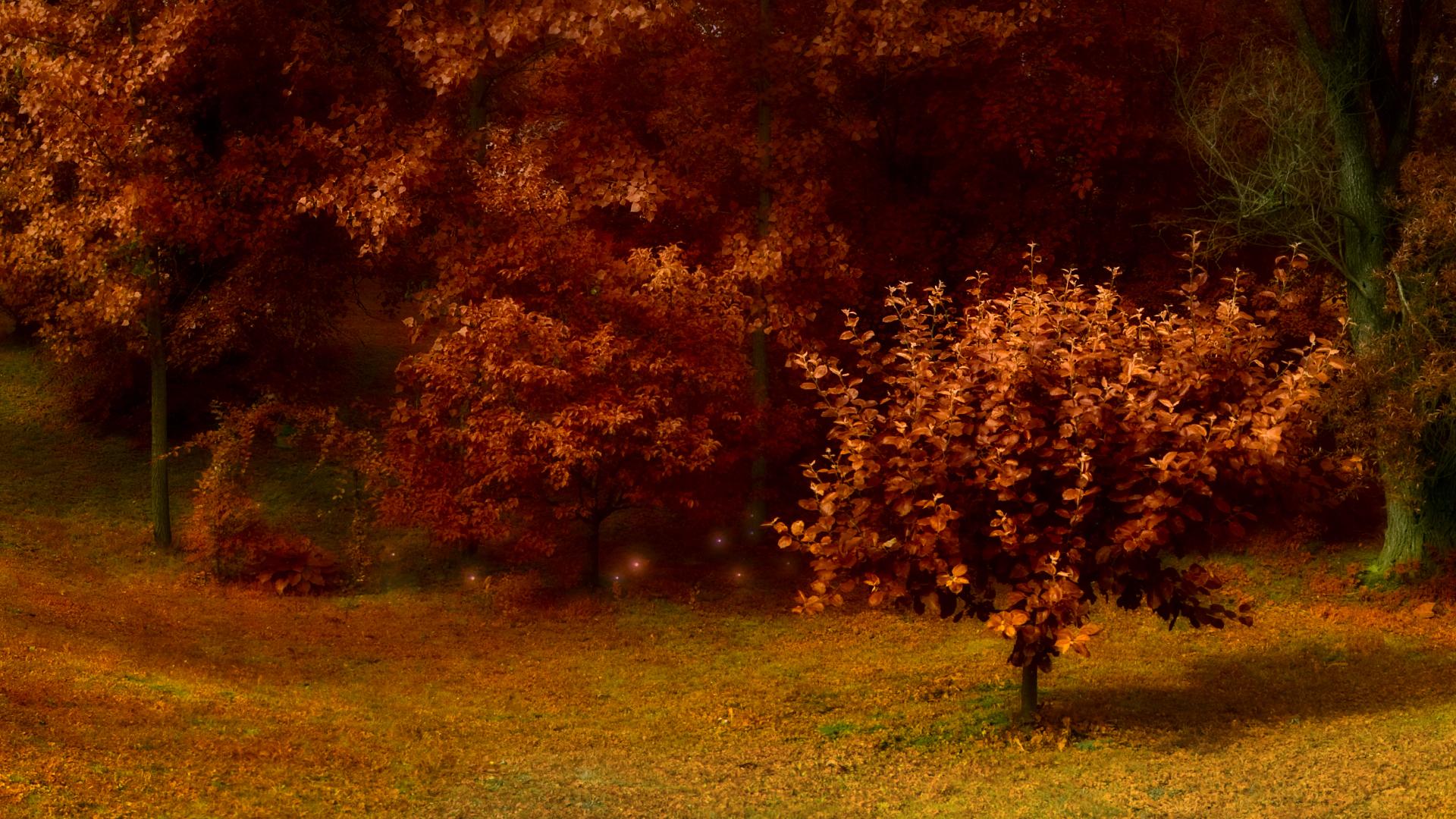 Autumn Trees HD Wallpaper 1080p HD Wallpapers 1920x1080