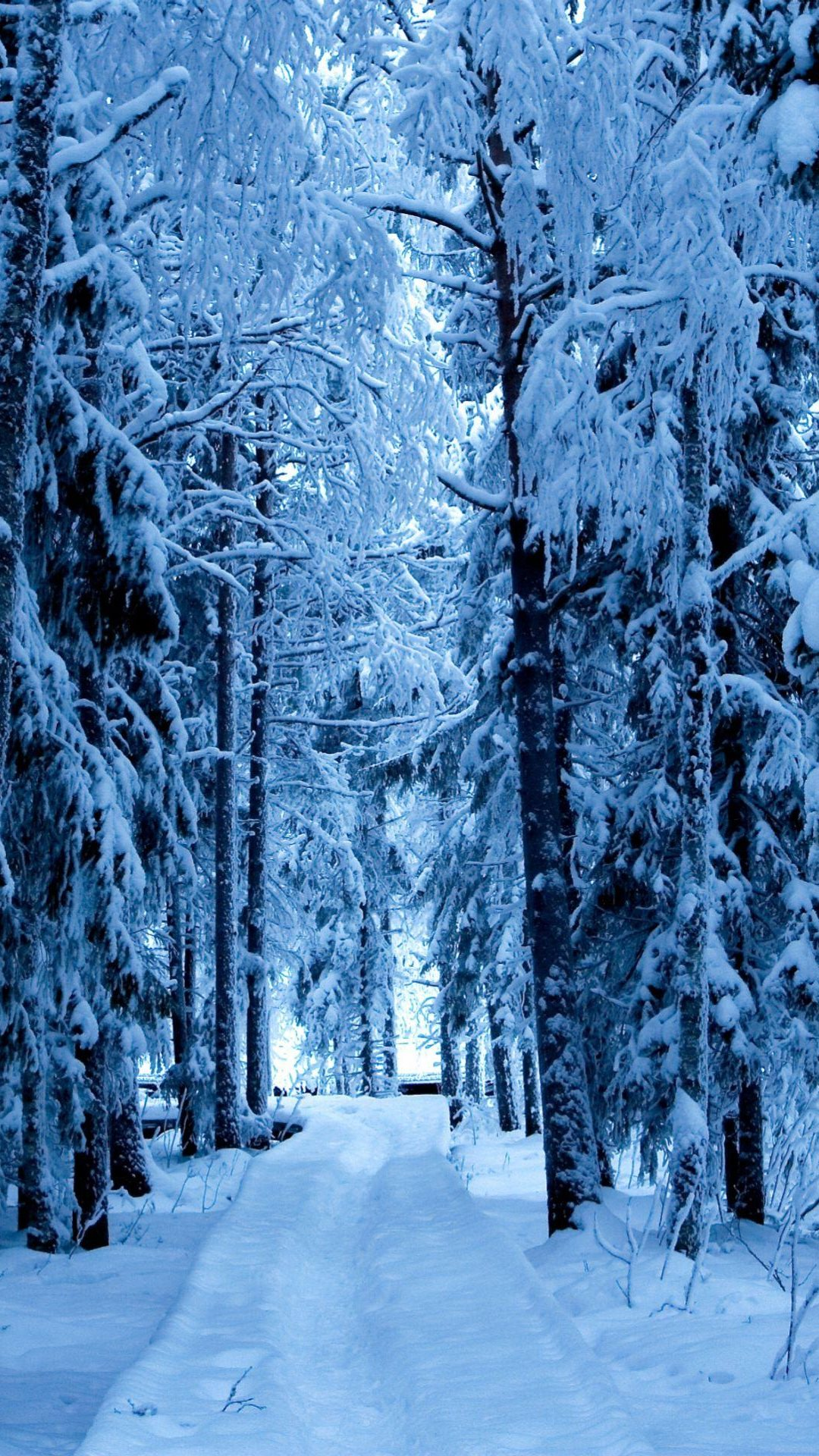 Snow Forest Blue Ice Android Wallpaper download 1080x1920