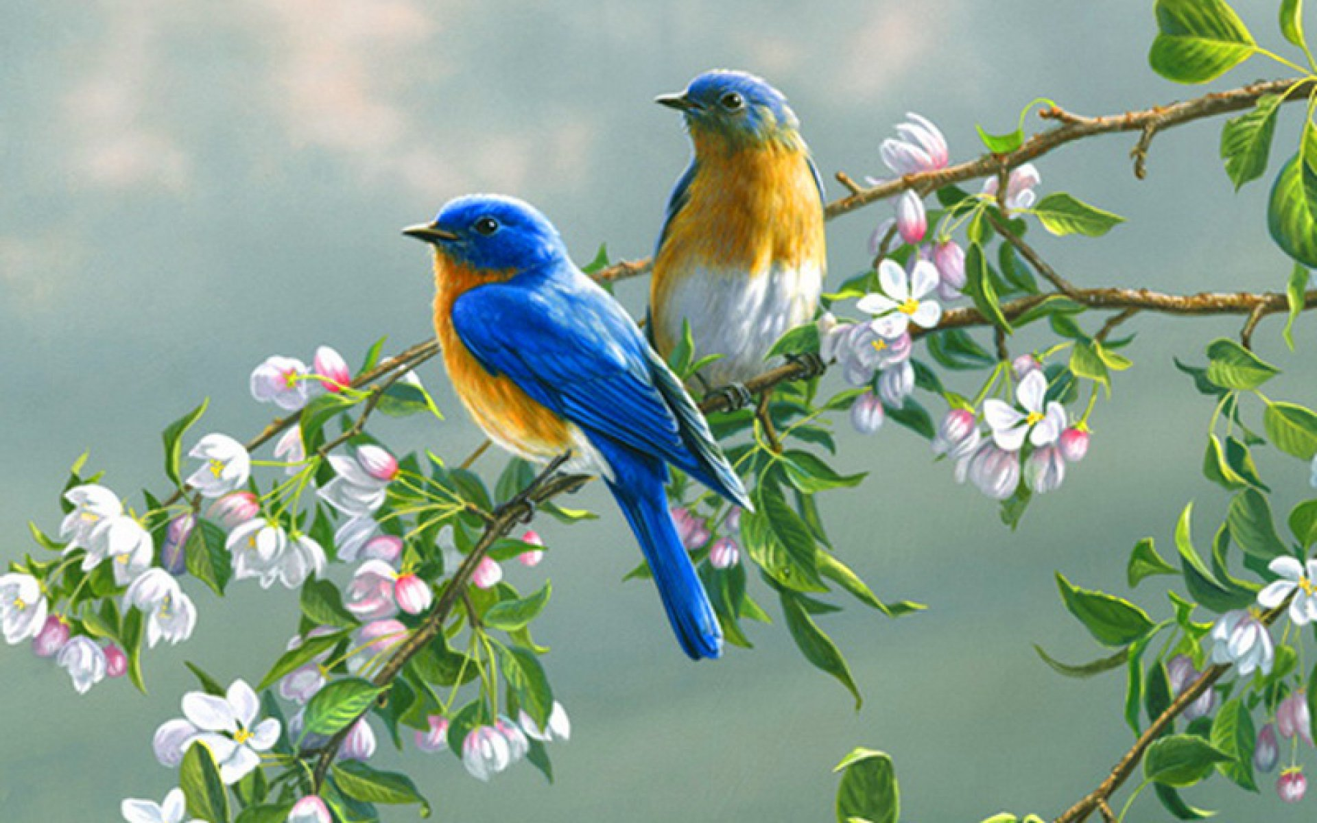 download bird wallpaper for home which is under the birds wallpapers 1920x1200