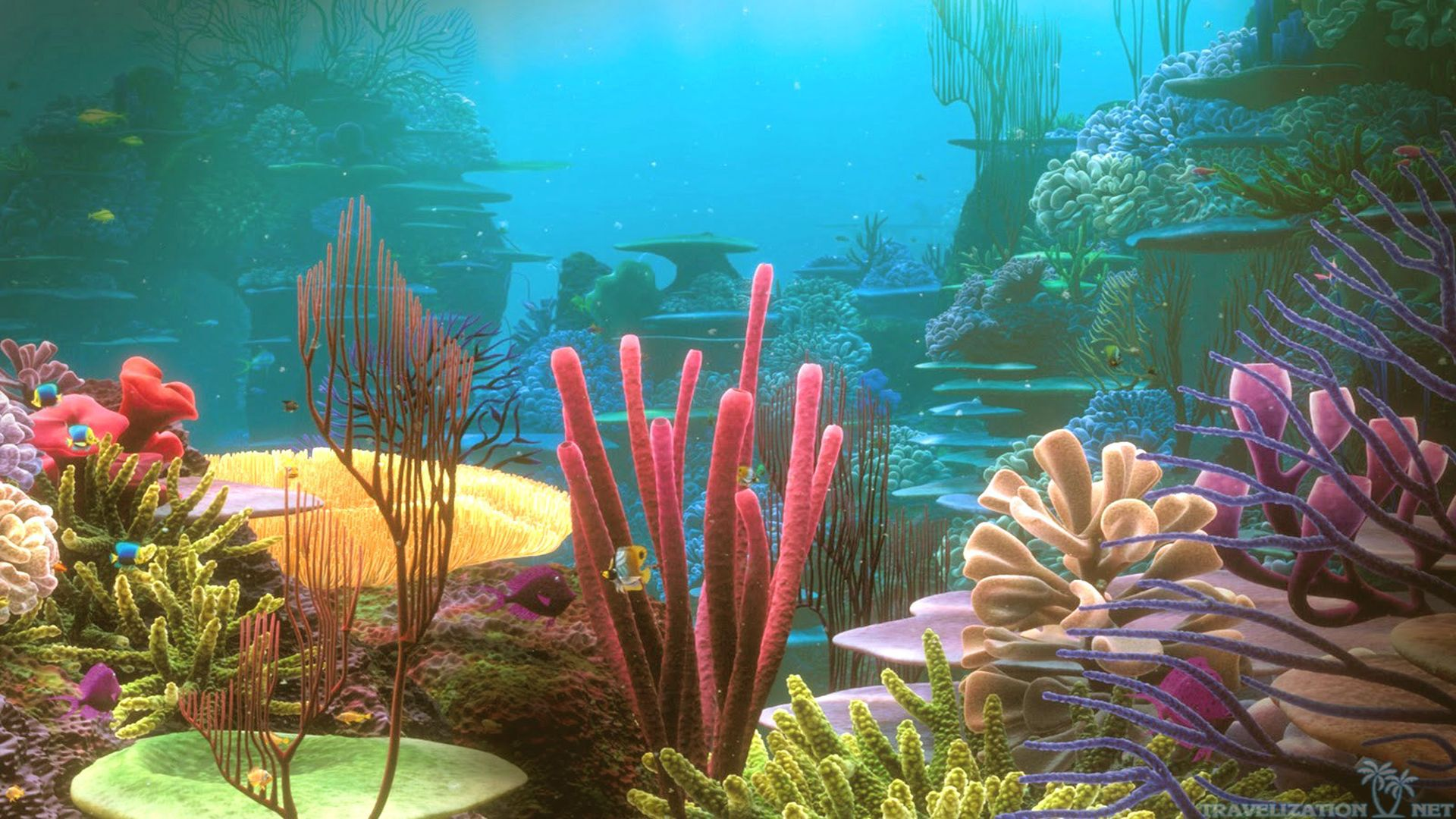Coral reef pictures for kids NASA Climate Kids : Gallery of Oceans