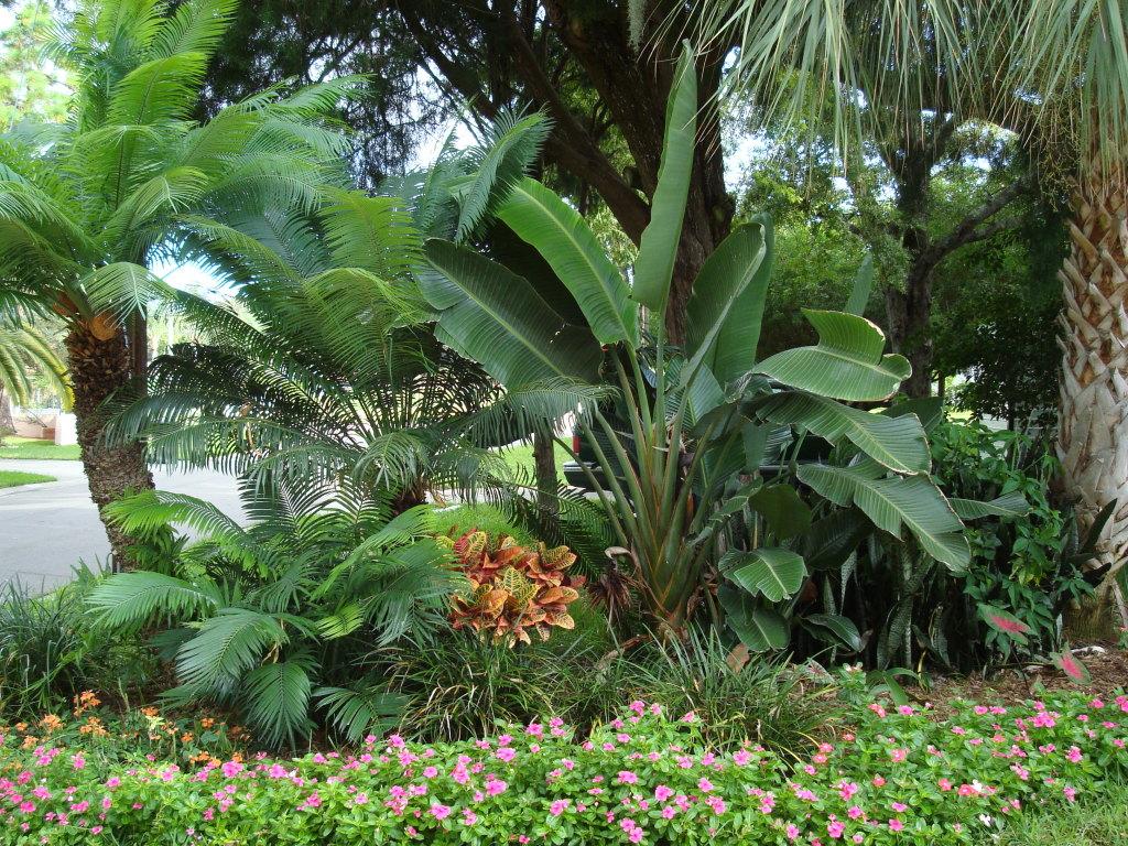 beautiful hawaiian zen garden - photo #30