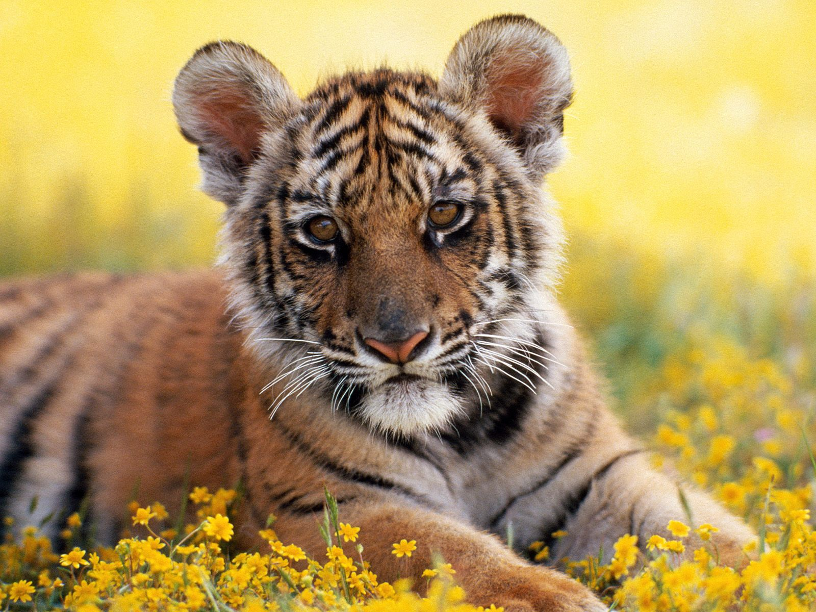 Animals Tweet This Bookmark this on Delicious 1600x1200