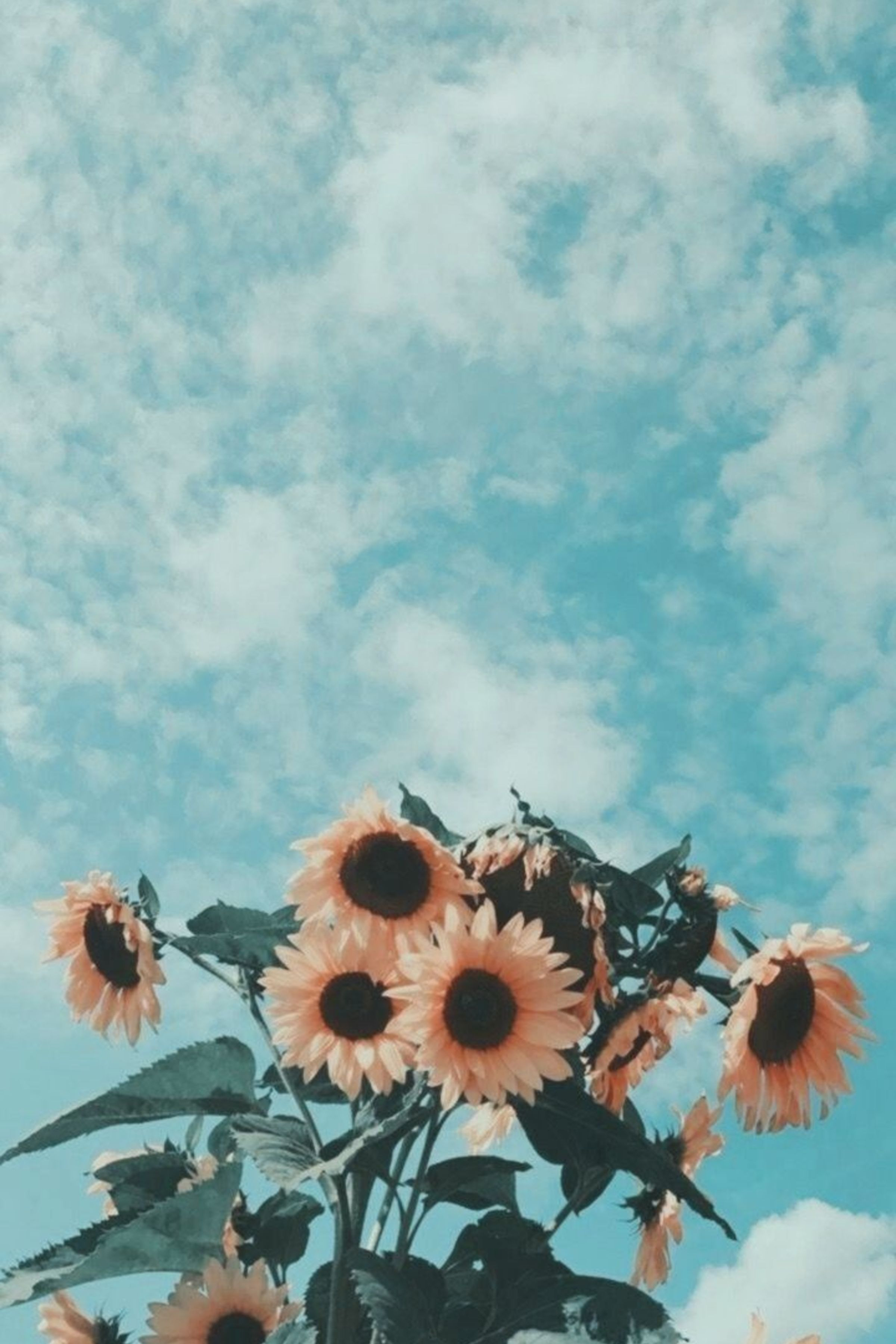 Pin by Asmaa Salleh on Flower With images Sunflower wallpaper 2400x3600