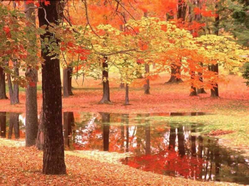 Wallpapers Blog autumn scene 800x600