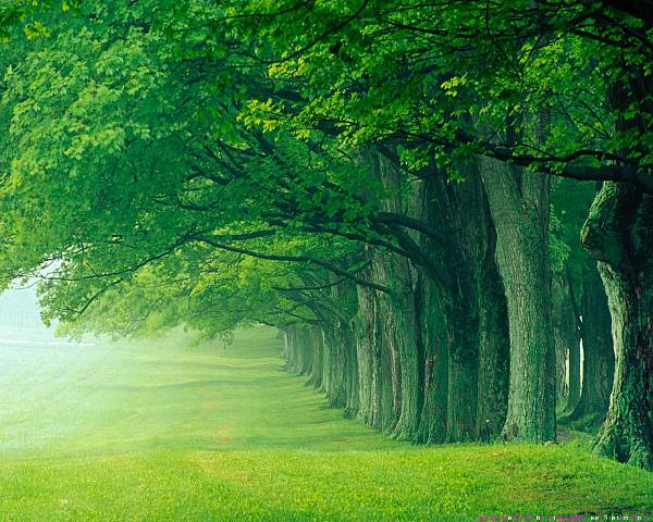 Beautiful Green Forest Background 600x480