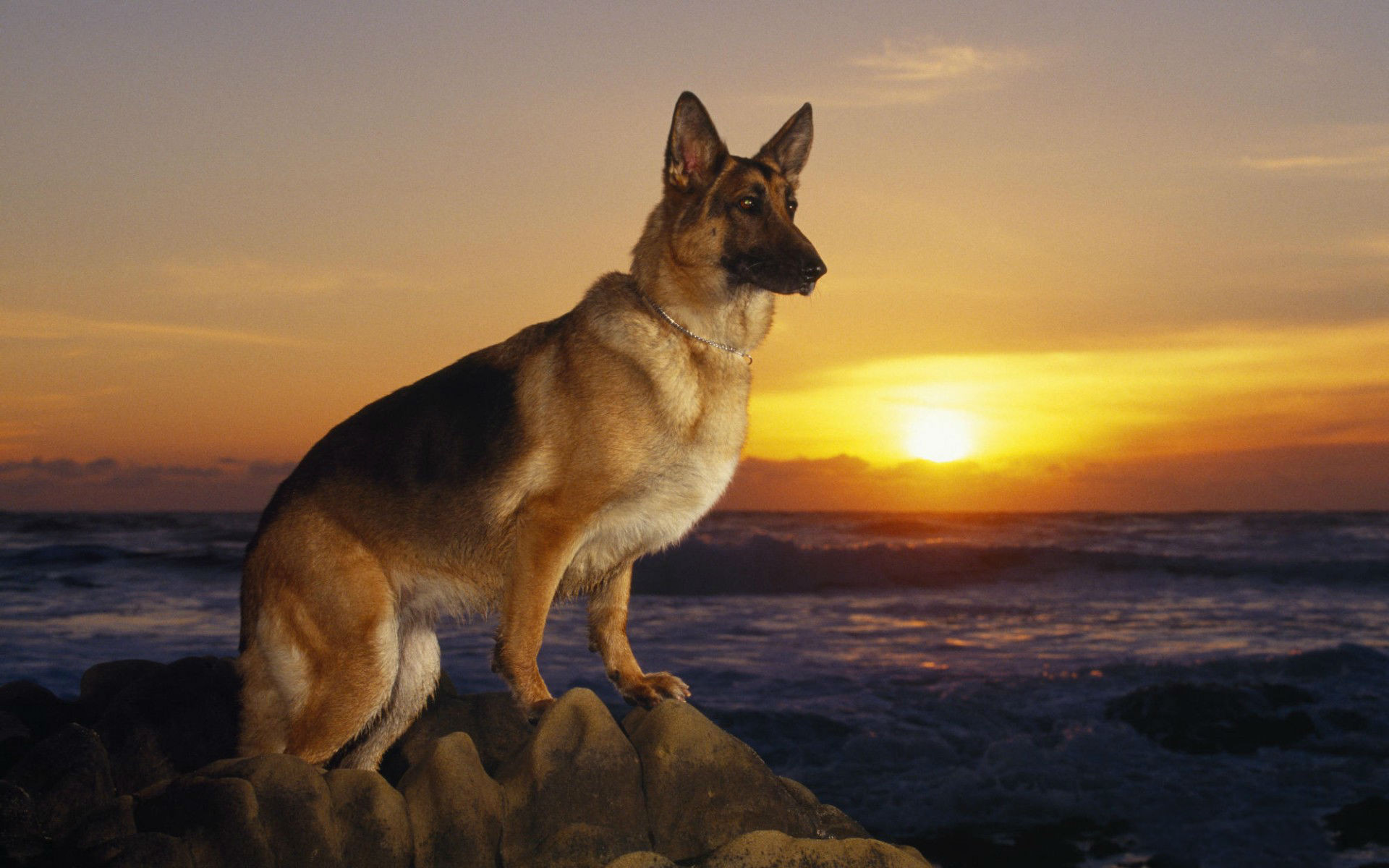 Cool Dogs Wallpapers 60 images 1920x1200