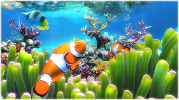 Clownfish Aquarium Live Wallpaper   Download 700x394
