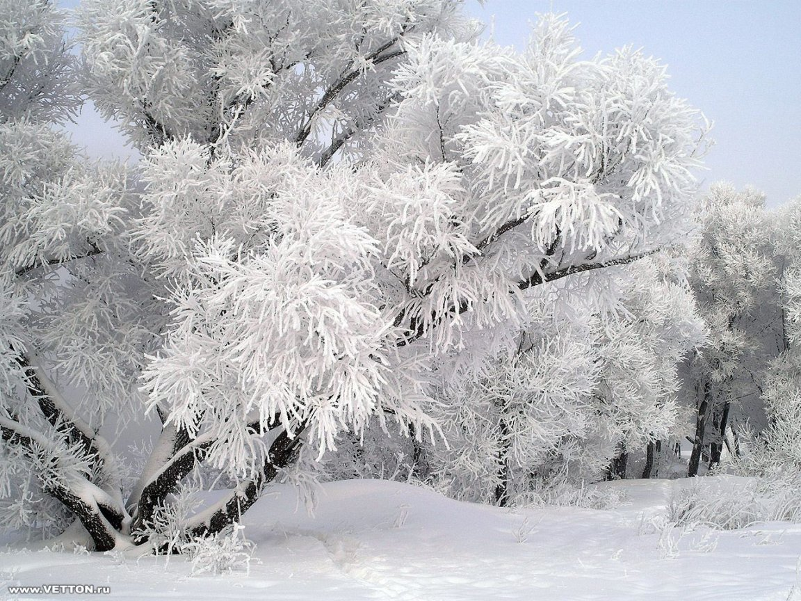 peartreedesigns Sweden Winter Nature Scene Pictures 1152x864
