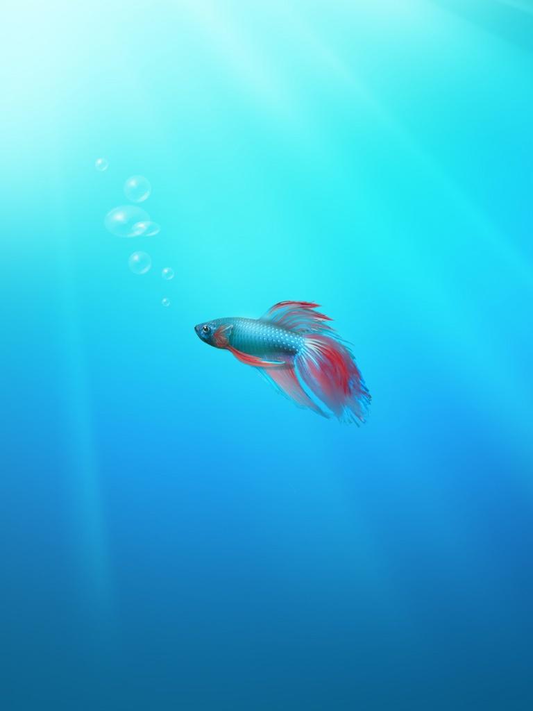 Windows 7 Beta Fish Wallpaper   iPad iPhone HD Wallpaper 768x1024