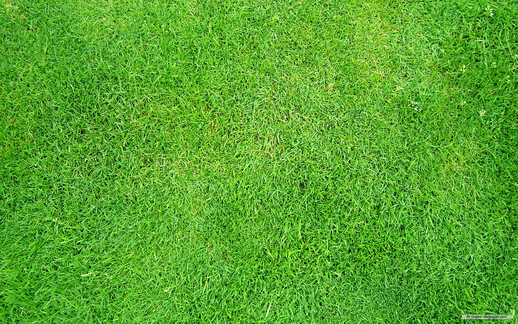grass wallpaper for wa...