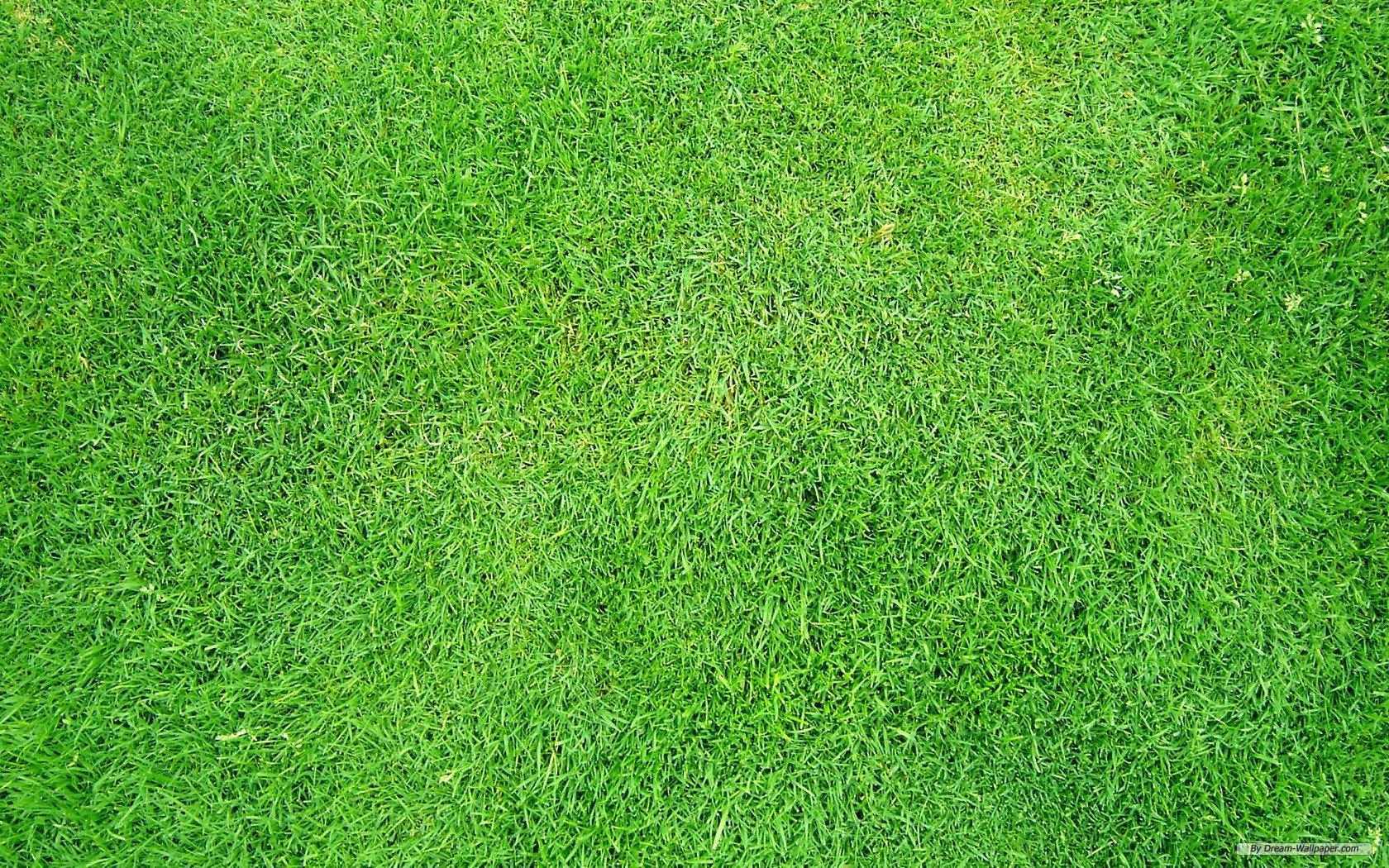 Grass Wallpaper WallpaperSafari