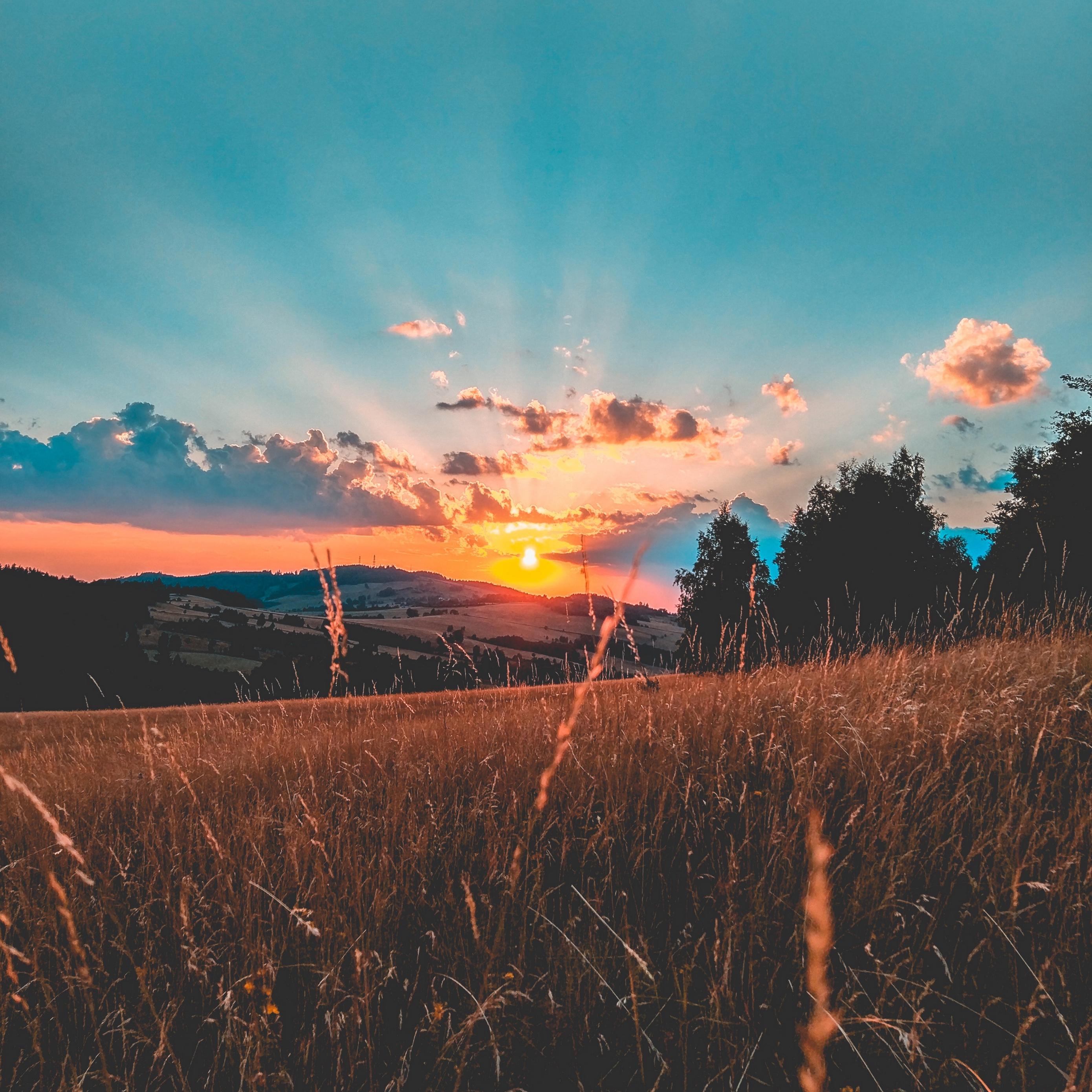 Download wallpaper 2780x2780 field sunset grass sky clouds 2780x2780