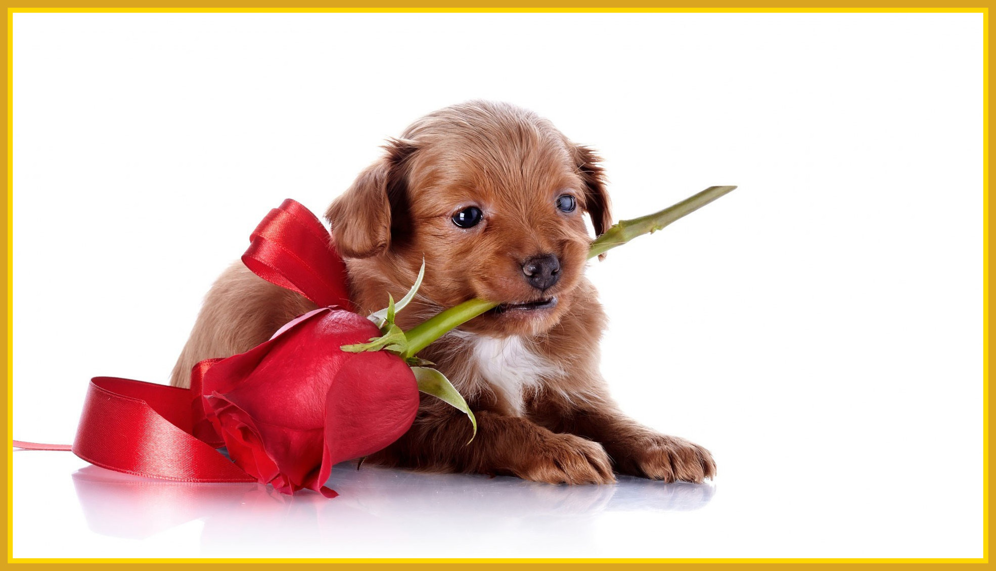 55 Puppy Valentine Wallpapers on WallpaperPlay 1970x1130