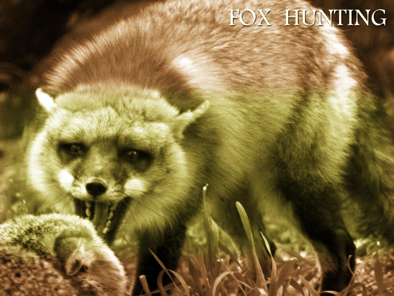 fox wallpaper fennec fox wallpaper fox background fox head wallpaper 1600x1200